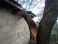 emergency-tree-services-in-sioux-falls_orig.jpg
