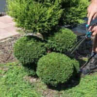 Midstate-Landscaping-Commercial-Landscaping-Lawn-Care-2-1024x683-circle.jpg